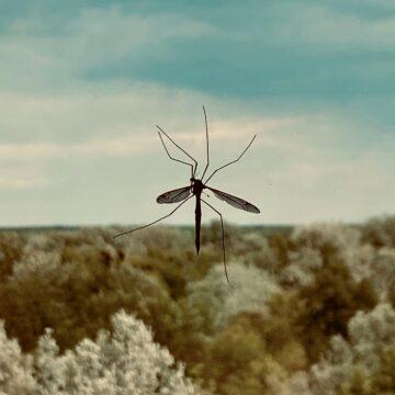 Malaria-Prävention und -Behandlung